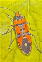 The Catalogue of the ''A. L. Montandon Collection'' of Palaearctic Heteroptera (Grigore Antipa)